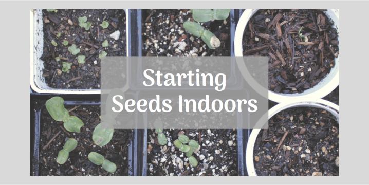 Starting Seeds for Your GardenIndoors